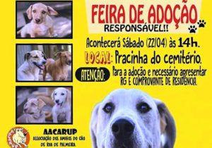 Feira de adoção de cães de rua em Palmeira