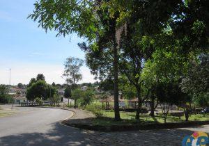 Prefeitura pronuncia-se sobre a poda drástica das azaleias do Museu