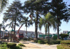Praça passa por transformações para adequação ao Plano Municipal de Arborização
