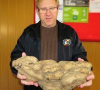 Rinaldo Agottani segurando a batata doce que pesou 5 Kg.