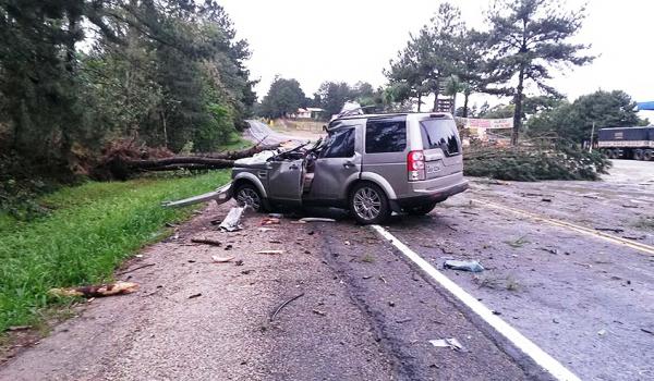 Queda de árvore na PR 151 provoca acidente de trânsito com morte
