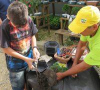 Visitantes poderão preparar seu próprio bonsai, com acompanhamento técnico.