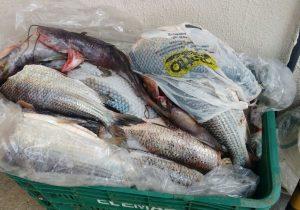 Polícia localiza mais de 20 quilos de peixe
