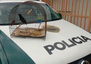 Polícia Ambiental registra ocorrências de pássaros silvestres em cativeiro e posse de arma de fogo em Palmeira