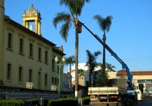Prefeitura realiza poda de palmeiras em todo área urbana