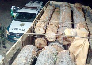 Polícia Ambiental encontra cerca de 12M³ de toras de pinheiro em propriedade rural