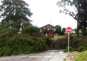Queda de árvores deixa Porto Amazonas sem energia elétrica