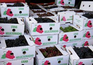 Feira da uva em Palmeira retorna nesta sexta-feira (18)