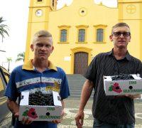Há 5 anos no ramo da viticultura, Giovani Rigoni, de Pinheiral de Cima, espera colher cerca de 12 toneladas de uva.