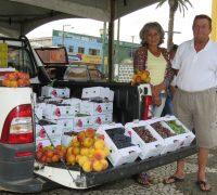 O Casal Renato Voinarovicz e Regina Camargo, da localidade de Colônia Maciel também estão comercializando uva niagara, pêssego e ameixa