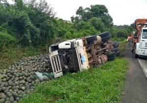 Motorista morre na PR 151 em Palmeira