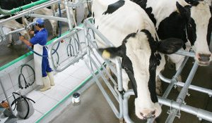 Valor da produção pecuária de origem animal de Palmeira cresce 249% em 17 anos