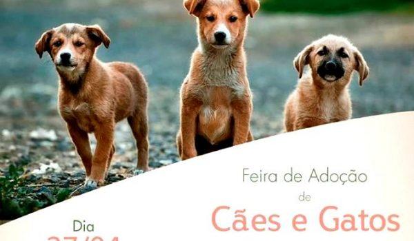 Aacarup altera local e horário da Feira de adoção de cães e gatos