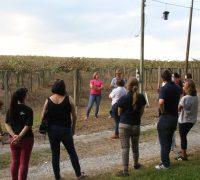 Acadêmicos do curso de Turismo da UEPG visitam propriedade rural em Palmeira.