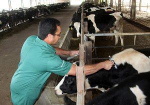 Iniciada Campanha de Vacinação contra a Febre Aftosa no Paraná
