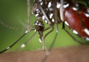 Paraná enfrenta a pior situação com a dengue desde 2016
