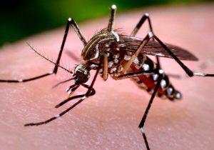 Mortes por dengue aumentam mais de 5 vezes em relação ao ano passado