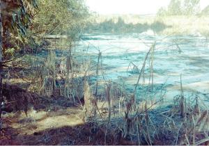 Polícia Ambiental notifica empresa em Palmeira por poluição