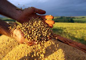 Plantio de soja já está liberado no Paraná