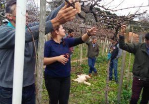Pesquisadores e técnicos se reúnem em Palmeira para debater viticultura no Paraná