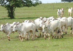 Ministério da Agricultura suspende vacinação contra Aftosa no Paraná