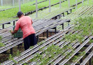 Produtores rurais sem comercialização por dois anos devem atualizar cadastro até segunda (14)