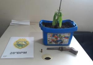 Através de denúncia anônima, Polícia localiza planta de maconha no Rocio II