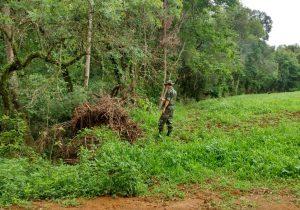Polícia Ambiental localiza destoca irregular em Palmeira