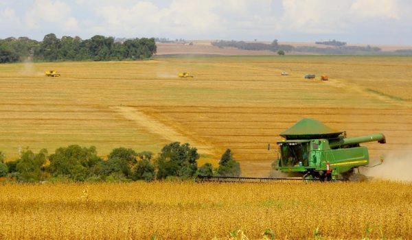 Safra de grãos do Estado deve atingir 41 milhões de toneladas