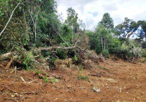 Polícia Ambiental registra destruição de vegetação nativa em Palmeira